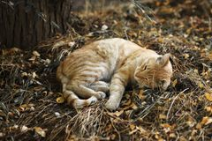 Foto nova dispersa de Cat Photographer, gato amarelo bonito foto de stock
