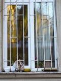 Foto nova dispersa de 2019 Cat Photographer, gato bonito imagem de stock