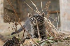 Foto nova dispersa de 2019 Cat Photographer, gato cinzento pequeno bonito fotos de stock royalty free