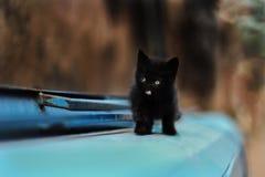 Foto nova dispersa de 2019 Cat Photographer, gato preto pequeno bonito imagens de stock royalty free