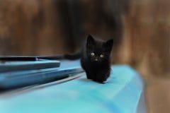 Foto nova dispersa de 2019 Cat Photographer, gato preto pequeno bonito imagem de stock royalty free