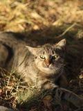 A foto nova dispersa de Cat Photographer, gato de tigre pequeno relaxa imagem de stock royalty free