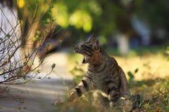 A foto nova dispersa de Cat Photographer, gato de tigre pequeno relaxa imagens de stock royalty free