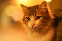 Foto nova dispersa de 2019 Cat Photographer, gatos bonitos da rua na noite fotografia de stock royalty free