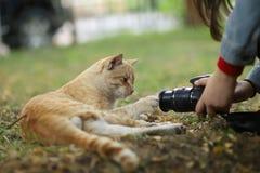 A foto nova dispersa de Cat Photographer, toma fotos do gato amarelo bonito foto de stock