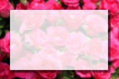 Foto obscura da flor cor-de-rosa cor-de-rosa imagem de stock royalty free