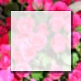 Foto obscura da flor cor-de-rosa cor-de-rosa fotografia de stock