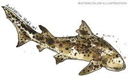 水下的v重点重点例证仓鼠动物美好的a重点上色克罗地亚背景foto水彩oct章鱼铺卫生纸图片