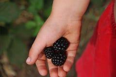 foto op Blackberry Stock Afbeeldingen