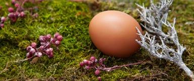 Foto orizzontale lunga della decorazione di Pasqua: Un uovo naturale su muschio Immagini Stock Libere da Diritti