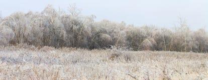 Foto panorámica del paisaje genérico del invierno Foto de archivo