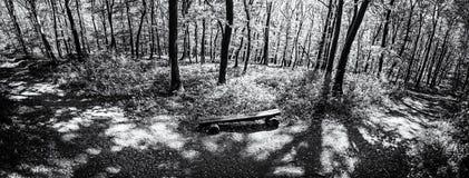 Foto panorâmico da floresta da mola, incolor Imagem de Stock Royalty Free