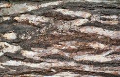 Foto panorâmico da textura do relevo da casca do pinho fotografia de stock royalty free
