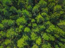 Foto panor?mico bonita sobre as partes superiores da opini?o a?rea da floresta do pinho De cima de Imagem tomada usando o zangão  imagem de stock