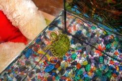 Foto, pequeña tortuga Rojo-espigada que se sienta en una hoja de algas imagen de archivo