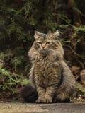 Foto perdida de 2019 Cat Photographer nueva, gatos lindos de la calle con el pelo largo fotografía de archivo
