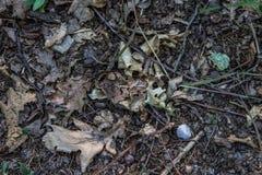 Foto perpendicolare della terra con le foglie ed i rami delle rocce Fotografia Stock