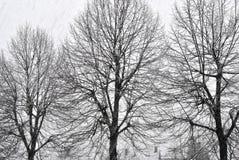 Foto preto e branco das árvores no tempo de inverno snowfall Foto de Stock Royalty Free
