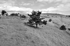 Foto preto e branco das árvores nos montes Foto de Stock