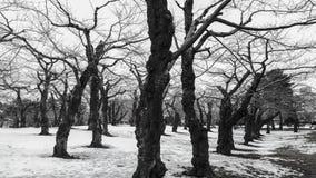 Foto preto e branco de árvores e de ramos secos na sagacidade de madeira Fotografia de Stock