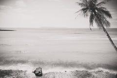 Foto preto e branco do seascape tropical do beira-mar no verão fotografia de stock royalty free