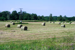 Foto of processed agriculture field in day Royalty Free Stock Photography