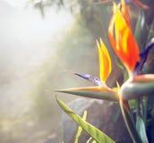Foto que apresenta a flora colorida do jardim tropical imagens de stock