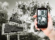 Foto que toma turística del cactus del patriarca Fotografía de archivo libre de regalías