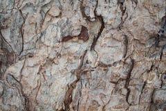 Foto rústica de la textura del primer de la corteza de roble Primer rústico del tronco de árbol Imágenes de archivo libres de regalías