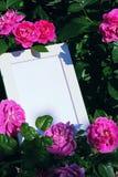 Foto-Rahmen-Rosa Rose Summer Garden Lizenzfreies Stockfoto