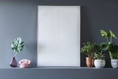 Foto reale di un bianco, manifesto vuoto che sta accanto alle piante nella v immagini stock