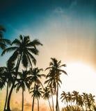 Foto-realistic computererzeugtes Bild eines schönen Sonnenuntergangs, mit Palmen im Vordergrund Stockfoto