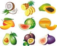 Foto-realistischer Satz der exotischen Früchte Stockbilder