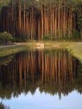 Foto reflexion Arkivbild