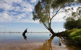 Árvore de goma no lago Mulwala, Austrália Imagens de Stock
