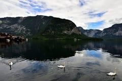 Foto's van berg en meer in Hallstatt van Oostenrijk met drie zwemmende zwanen Stock Foto's