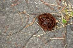 Foto simple de la aún-vida del cono del pino Foto de archivo libre de regalías