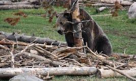 Foto sind im Berlin-Zoo geschossen worden Stockbild