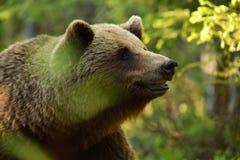 Foto sind im Berlin-Zoo geschossen worden Lizenzfreie Stockfotos