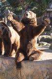 Foto sind im Berlin-Zoo geschossen worden Stockbilder