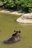 Foto sind im Berlin-Zoo geschossen worden Lizenzfreies Stockfoto