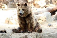 Foto sind im Berlin-Zoo geschossen worden Stockfotos