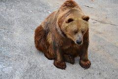 Foto sind im Berlin-Zoo geschossen worden Lizenzfreies Stockbild