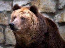 Foto sind im Berlin-Zoo geschossen worden Lizenzfreie Stockfotografie