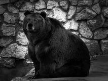 Foto sind im Berlin-Zoo geschossen worden Stockfotografie