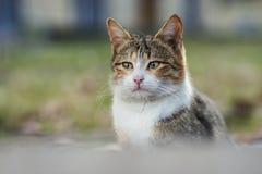 Foto smarrita di 2019 Cat Photographer la nuova, gatto marrone sveglio della via ha un fronte triste di grido fotografia stock