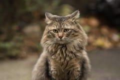 Foto smarrita di 2019 Cat Photographer nuova, gatti svegli della via con peli lunghi fotografie stock libere da diritti