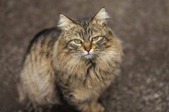 Foto smarrita di 2019 Cat Photographer nuova, gatti svegli della via con peli lunghi fotografia stock libera da diritti