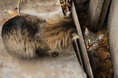 Foto smarrita di 2019 Cat Photographer nuova, gatti svegli della via con peli lunghi immagini stock libere da diritti