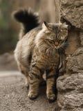 Foto smarrita di 2019 Cat Photographer nuova, gatti svegli della via con peli lunghi fotografia stock